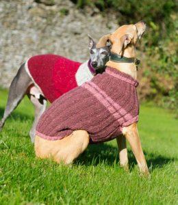 hundepullover erklärung und definition