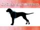 hundepullover groesse messen
